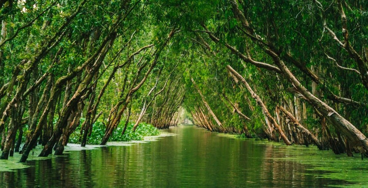 The History Of Ecotourism And Its Weight In Sustainable Development