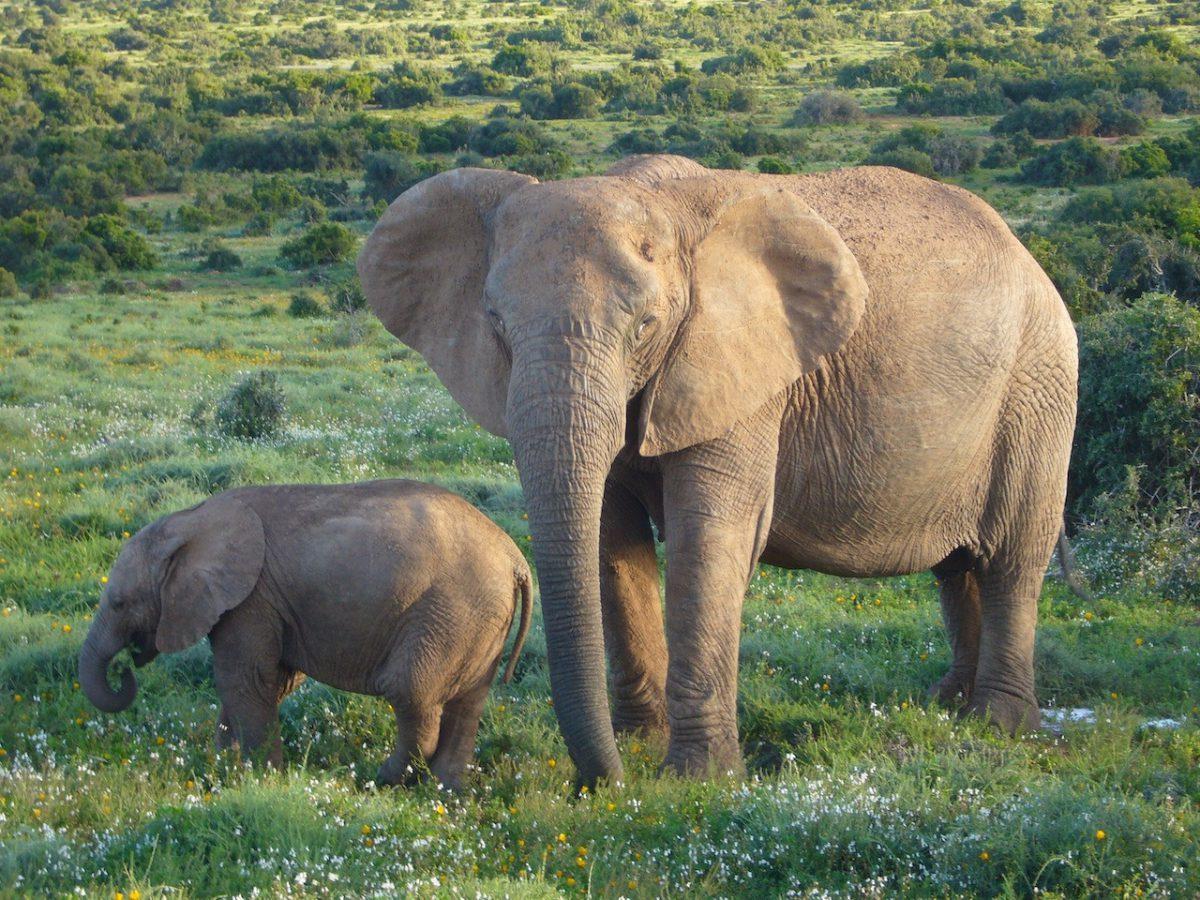 Tropical Tours & Safaris